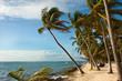 palm trees row beach