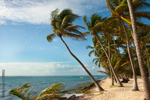 palmy plaża row