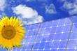 Solar Sonnenblume Biene wolken