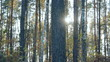 autumn sunny  forest