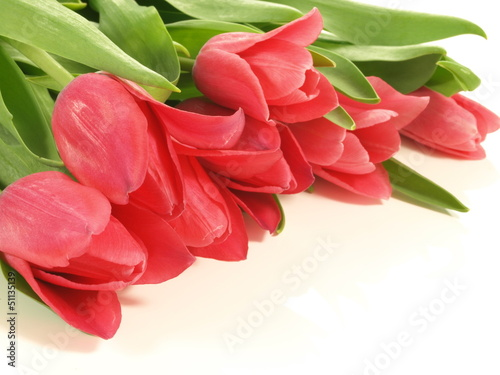 Bouquet of tulips, close up