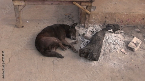 dog sleeping near fire ash in Varanasi street, India