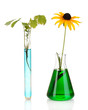 plant in test-tube in colorful solution isolated on white