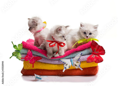 many kittens and butterflys on towels