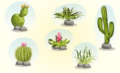 Collection of cacti and desert plants