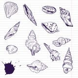 Ink drawing of shells