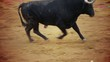 Powerful spanish bull, bullfight arena