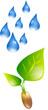 Pflanze Regen Wachstum