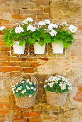 Flowers on a Wall