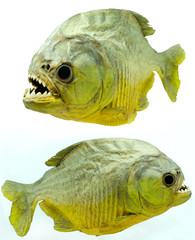 Piranha side on isolated