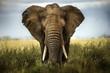 Leinwanddruck Bild - sfondo di elefante