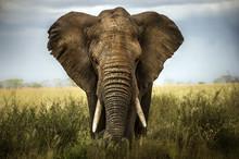 """Постер, картина, фотообои """"sfondo di elefante"""""""