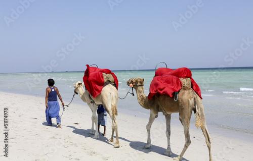 Fotobehang Tunesië Camel on the beach of Djerba
