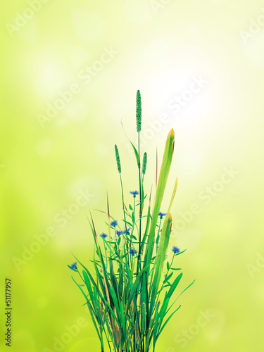 field of grass bush