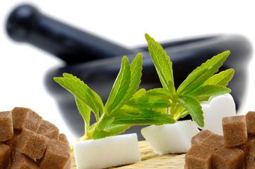 Stevia Rebaudiana mit Zucker und Mörser