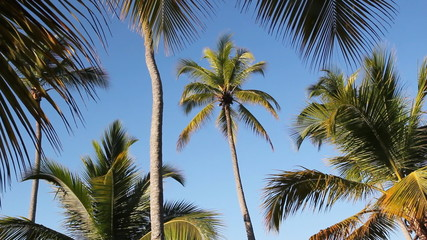 Morning palm trees.