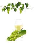 Weissweinglas und Weintrauben