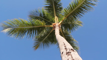Looking up at a palm tree.