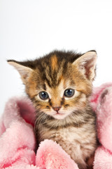 Kitten in pink towel
