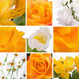 Collage of yellow flowers