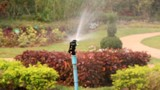 Sprinkler water in the garden