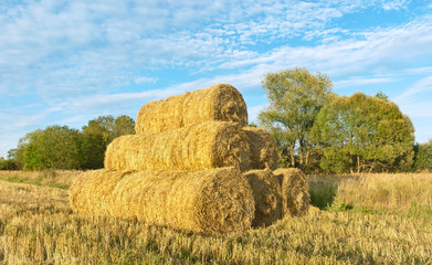 Straw stack on a scythed field