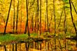 Spiegelung der Natur - 51194553