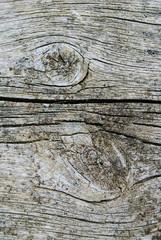 nodi del legno