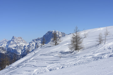 winter trees, San Pellegrino pass