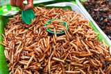 Thai food at market. Fried insects mealworms for snack
