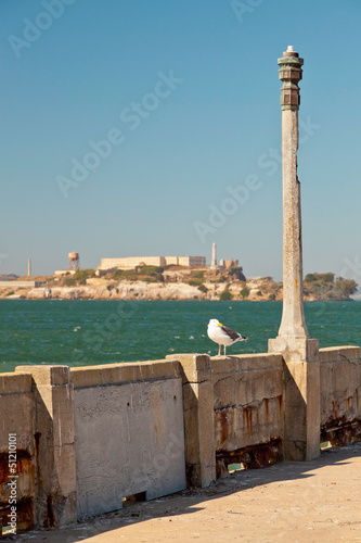 Seagull sitting on wall with Alcatraz in the background. San Fra
