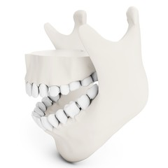 3d human jaw bone opened  with teeth