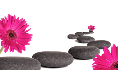 Lava stones with daisy flowers blooms, isolated on white