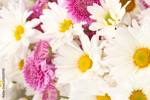 bouquet of daisies isolated on white