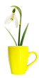 flower in yellow mug