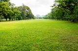 Fototapety green grass field in big city park