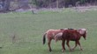 Playful horses in a field