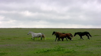 Herd and steppe. Evening