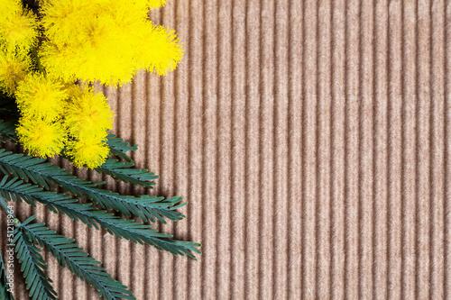 mimosa su cartoncino