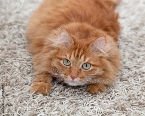 Stop cat from scratching up carpet