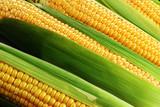 corn cob - 51229560