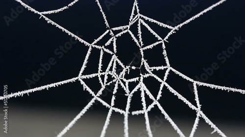 Cobweb in frost in the wind