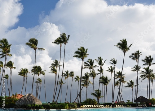 Coconut trees on white clouds