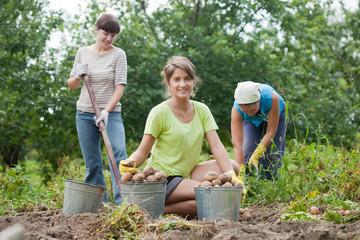 women harvested potatoes