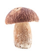 Boletus edulis mushrooms isolated on white background