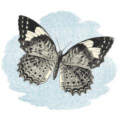 Butterfly on blue sky