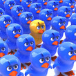 Little yellow chick stands out in crowd of bluebirds