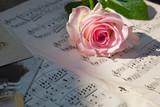 rosa Rose und antike Musiknoten