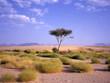 Tree at an oasis at the Arab desert