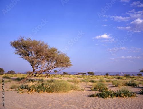 oasis between Marib and Seyun